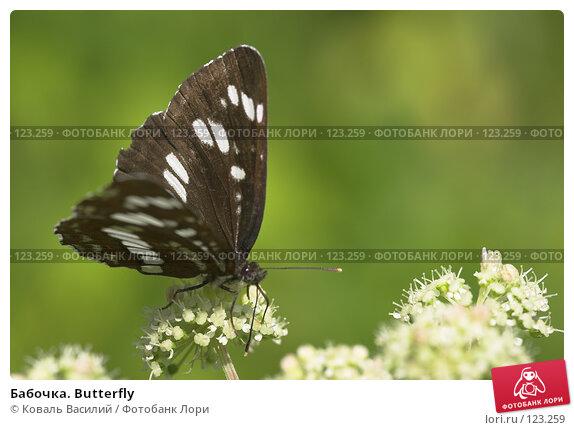 Бабочка. Butterfly, фото № 123259, снято 26 июля 2017 г. (c) Коваль Василий / Фотобанк Лори