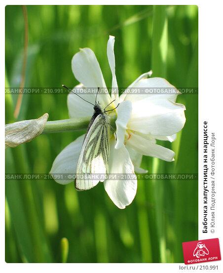 Бабочка капустница на нарциссе, фото № 210991, снято 11 июня 2006 г. (c) Юлия Селезнева / Фотобанк Лори
