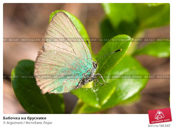 Купить «Бабочка на бруснике», фото № 60547, снято 22 июня 2006 г. (c) Argument / Фотобанк Лори