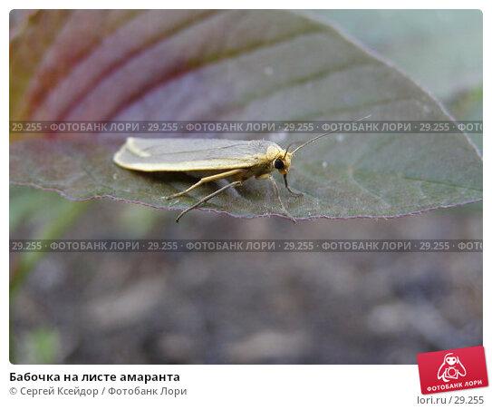 Бабочка на листе амаранта, фото № 29255, снято 4 июля 2006 г. (c) Сергей Ксейдор / Фотобанк Лори