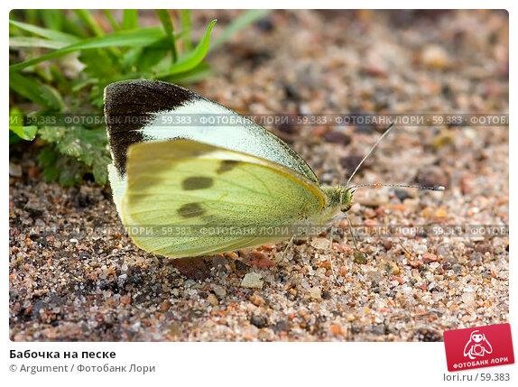 Купить «Бабочка на песке», фото № 59383, снято 7 сентября 2006 г. (c) Argument / Фотобанк Лори