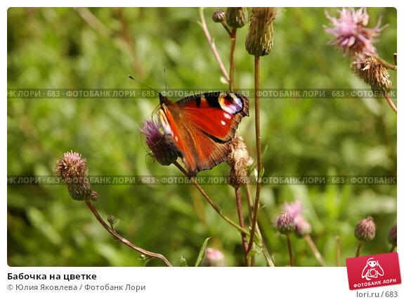 Бабочка на цветке, фото № 683, снято 2 августа 2005 г. (c) Юлия Яковлева / Фотобанк Лори