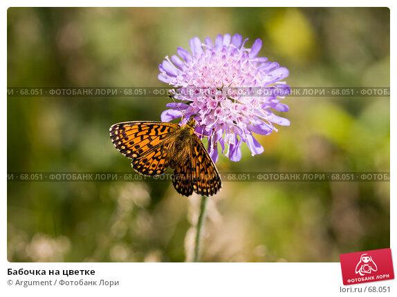 Бабочка на цветке, фото № 68051, снято 7 июля 2007 г. (c) Argument / Фотобанк Лори