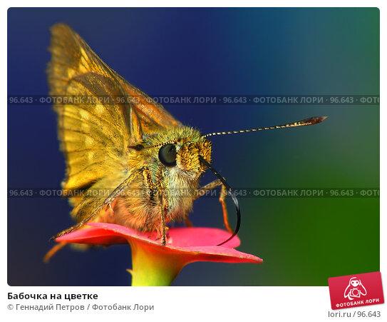 Бабочка на цветке, фото № 96643, снято 23 июля 2017 г. (c) Геннадий Петров / Фотобанк Лори