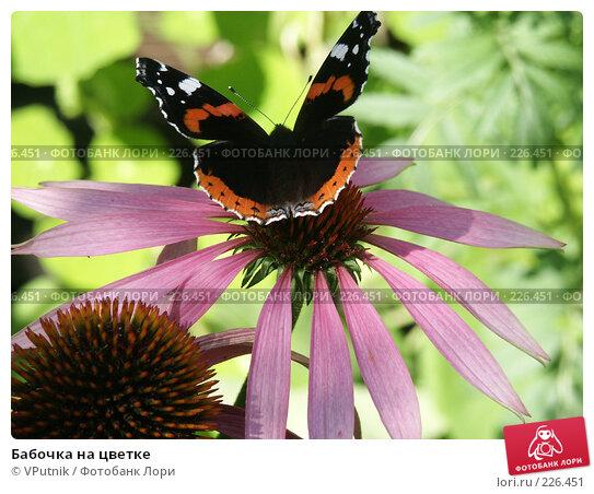 Бабочка на цветке, фото № 226451, снято 29 августа 2006 г. (c) VPutnik / Фотобанк Лори