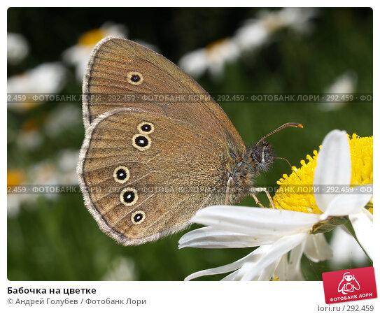 Бабочка на цветке, фото № 292459, снято 23 июня 2007 г. (c) Андрей Голубев / Фотобанк Лори