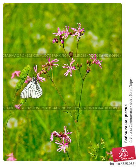 Бабочка на цветке, фото № 325035, снято 25 июня 2006 г. (c) Ирина Солошенко / Фотобанк Лори