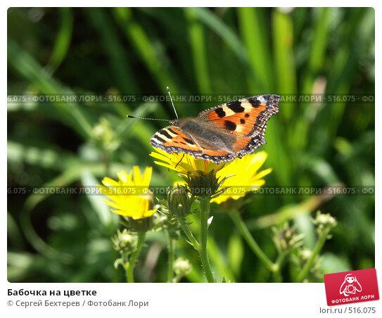 Купить «Бабочка на цветке», фото № 516075, снято 27 августа 2004 г. (c) Сергей Бехтерев / Фотобанк Лори