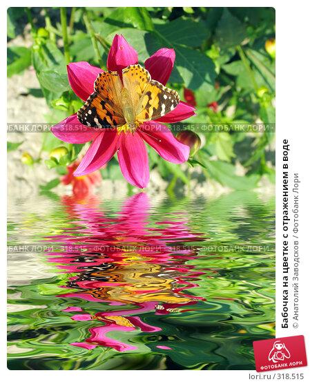 Бабочка на цветке с отражением в воде, фото № 318515, снято 31 августа 2004 г. (c) Анатолий Заводсков / Фотобанк Лори