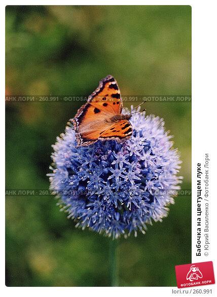 Бабочка на цветущем луке, фото № 260991, снято 3 декабря 2016 г. (c) Юрий Василенко / Фотобанк Лори