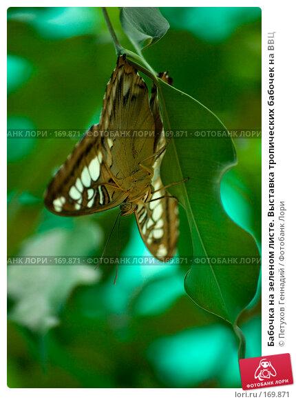 Купить «Бабочка на зеленом листе. Выставка тропических бабочек на ВВЦ», фото № 169871, снято 30 июня 2007 г. (c) Петухов Геннадий / Фотобанк Лори