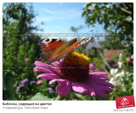 Бабочка, сидящая на цветке, фото № 118711, снято 1 сентября 2007 г. (c) Карелин Д.А. / Фотобанк Лори