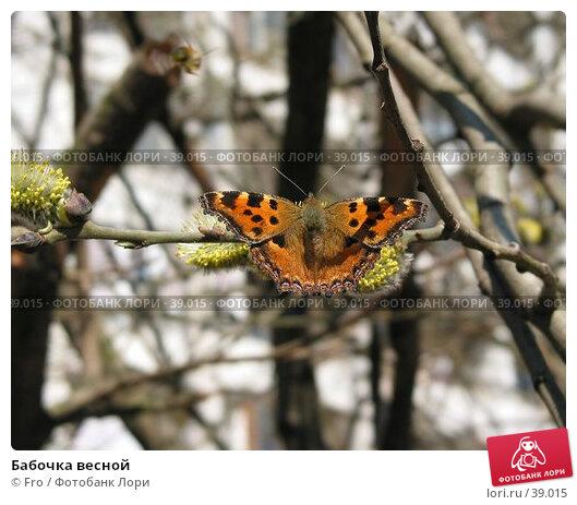 Бабочка весной, фото № 39015, снято 18 апреля 2004 г. (c) Fro / Фотобанк Лори