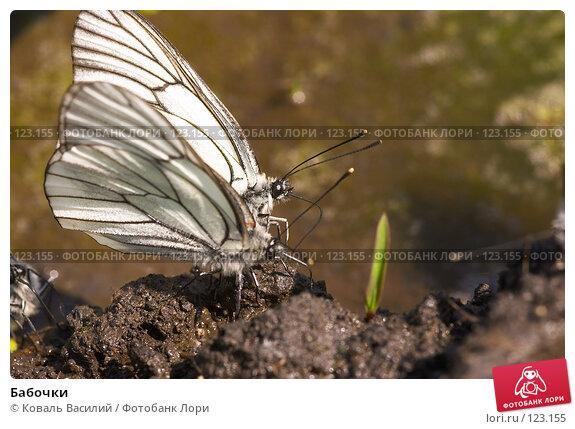 Бабочки, фото № 123155, снято 12 июня 2006 г. (c) Коваль Василий / Фотобанк Лори