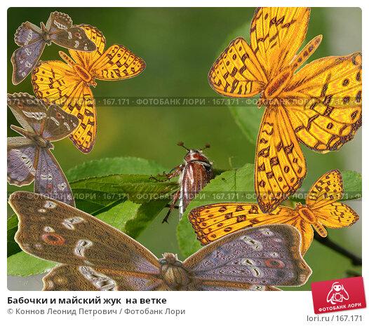 Купить «Бабочки и майский жук  на ветке», иллюстрация № 167171 (c) Коннов Леонид Петрович / Фотобанк Лори