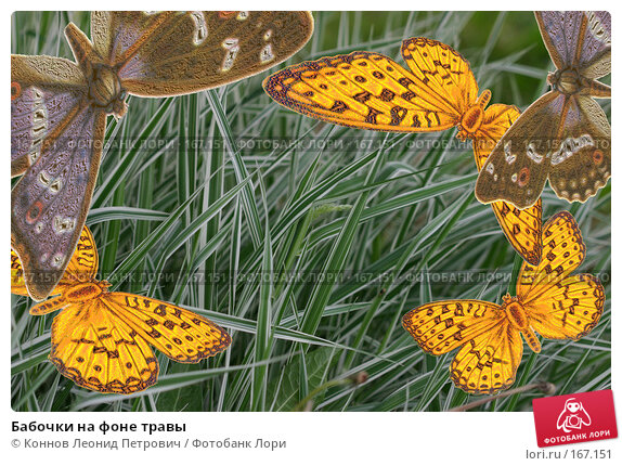 Бабочки на фоне травы, иллюстрация № 167151 (c) Коннов Леонид Петрович / Фотобанк Лори