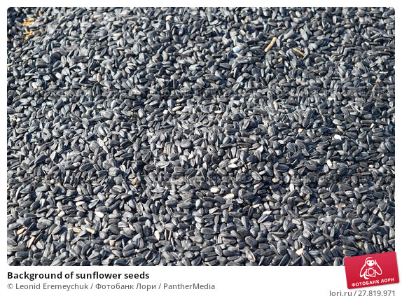 Купить «Background of sunflower seeds», фото № 27819971, снято 22 февраля 2018 г. (c) PantherMedia / Фотобанк Лори
