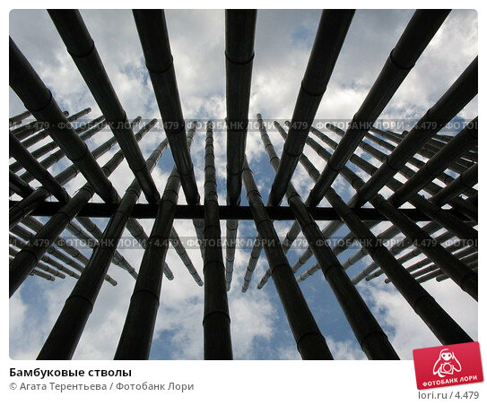 Бамбуковые стволы, фото № 4479, снято 21 мая 2006 г. (c) Агата Терентьева / Фотобанк Лори