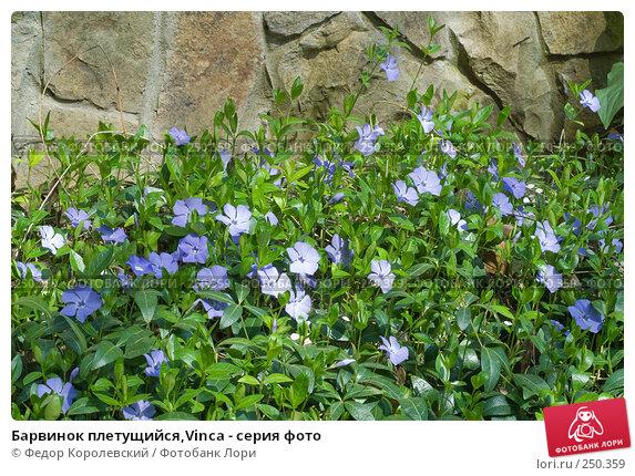 Барвинок плетущийся,Vinca - серия фото, фото № 250359, снято 12 апреля 2008 г. (c) Федор Королевский / Фотобанк Лори