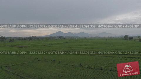 Купить «Batur Agung volcano and Rice Field on Bali 4K Drone shot», видеоролик № 32391339, снято 1 ноября 2019 г. (c) Aleksejs Bergmanis / Фотобанк Лори