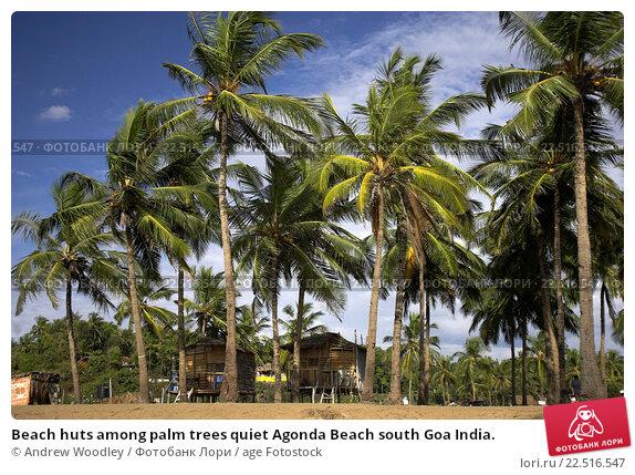 Купить «Beach huts among palm trees quiet Agonda Beach south Goa India.», фото № 22516547, снято 19 марта 2019 г. (c) age Fotostock / Фотобанк Лори