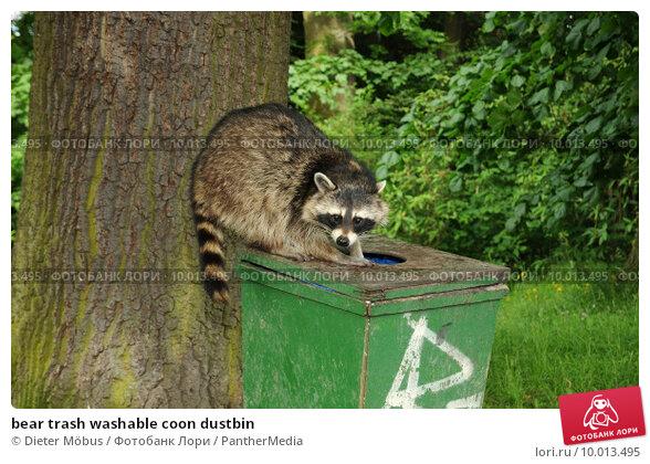 Купить «bear trash washable coon dustbin», фото № 10013495, снято 22 марта 2019 г. (c) PantherMedia / Фотобанк Лори