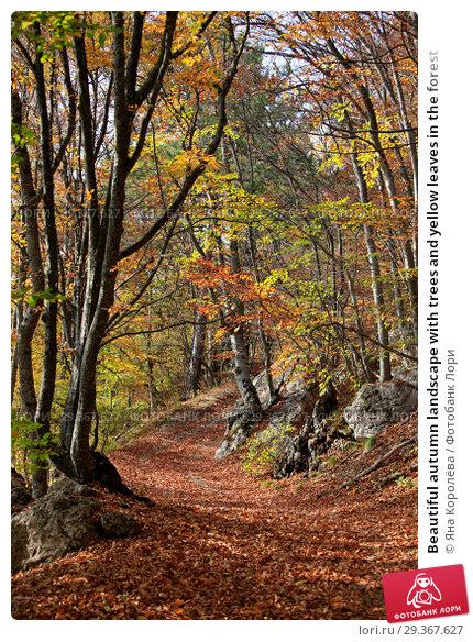 Купить «Beautiful autumn landscape with trees and yellow leaves in the forest», фото № 29367627, снято 19 октября 2018 г. (c) Яна Королёва / Фотобанк Лори