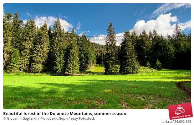 Beautiful forest in the Dolomite Mountains, summer season. Стоковое фото, фотограф Giovanni Gagliardi / easy Fotostock / Фотобанк Лори