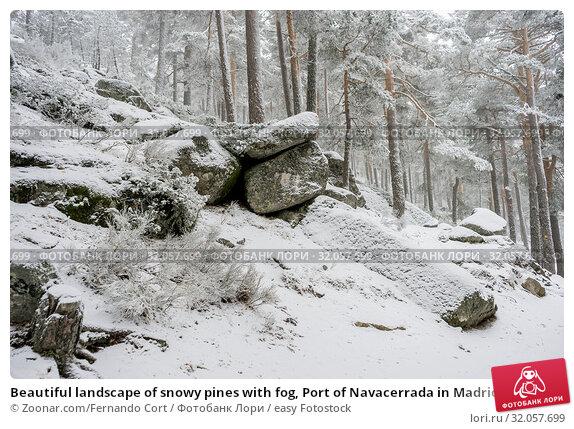 Beautiful landscape of snowy pines with fog, Port of Navacerrada in Madrid, Spain. Стоковое фото, фотограф Zoonar.com/Fernando Cort / easy Fotostock / Фотобанк Лори