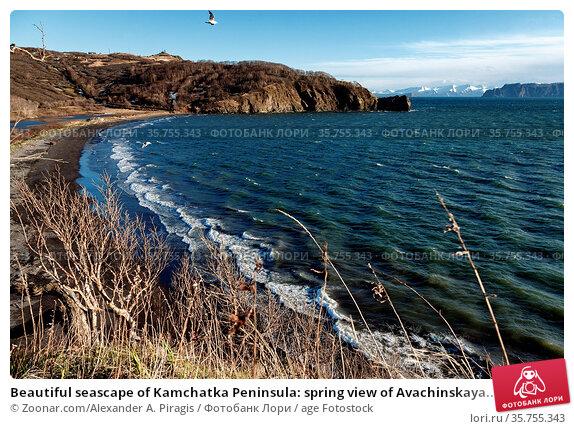 Beautiful seascape of Kamchatka Peninsula: spring view of Avachinskaya... Стоковое фото, фотограф Zoonar.com/Alexander A. Piragis / age Fotostock / Фотобанк Лори