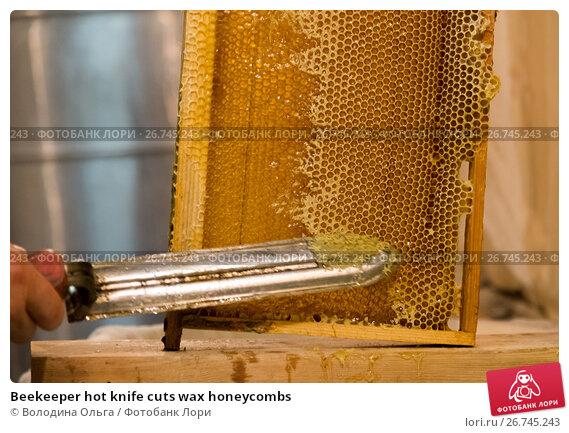 Купить «Beekeeper hot knife cuts wax honeycombs», фото № 26745243, снято 7 августа 2017 г. (c) Володина Ольга / Фотобанк Лори