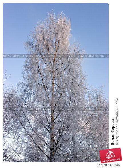 Купить «Белая береза», фото № 470507, снято 28 декабря 2004 г. (c) Argument / Фотобанк Лори