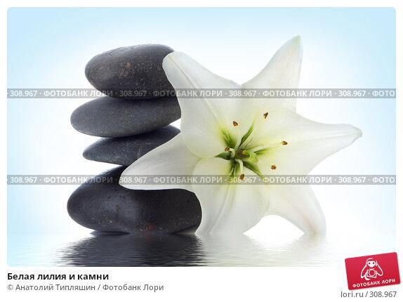 Купить «Белая лилия и камни», фото № 308967, снято 27 июня 2007 г. (c) Анатолий Типляшин / Фотобанк Лори