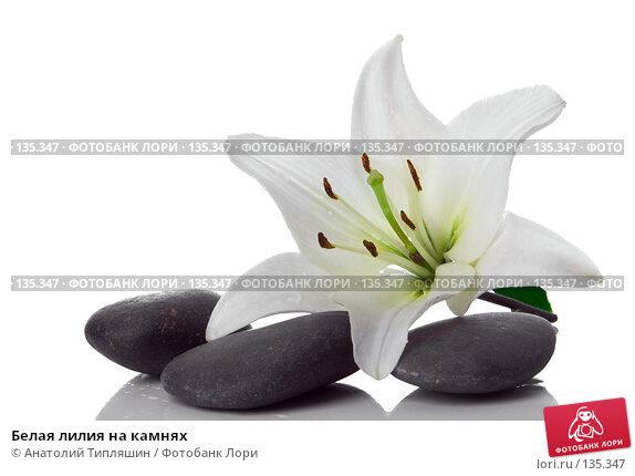 Белая лилия на камнях, фото № 135347, снято 27 июня 2007 г. (c) Анатолий Типляшин / Фотобанк Лори