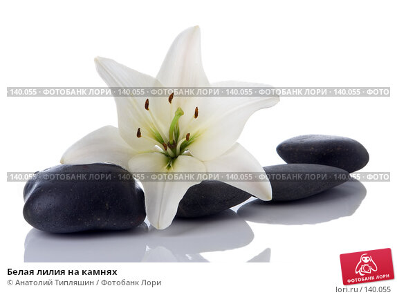 Белая лилия на камнях, фото № 140055, снято 27 июня 2007 г. (c) Анатолий Типляшин / Фотобанк Лори