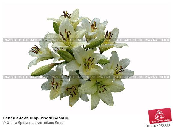 Белая лилия-шар. Изолировано., фото № 262863, снято 19 июля 2006 г. (c) Ольга Дроздова / Фотобанк Лори