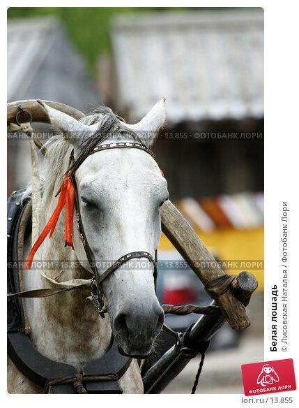 Белая лошадь, фото № 13855, снято 10 июля 2005 г. (c) Лисовская Наталья / Фотобанк Лори