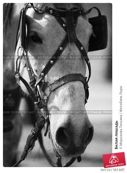 Купить «Белая лошадь», фото № 161647, снято 14 апреля 2007 г. (c) Морозова Татьяна / Фотобанк Лори