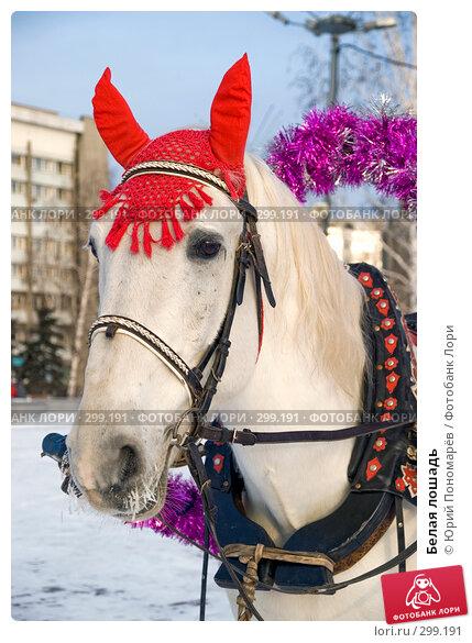 Белая лошадь, фото № 299191, снято 6 января 2008 г. (c) Юрий Пономарёв / Фотобанк Лори