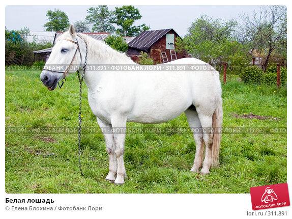 Белая лошадь, фото № 311891, снято 29 мая 2008 г. (c) Елена Блохина / Фотобанк Лори