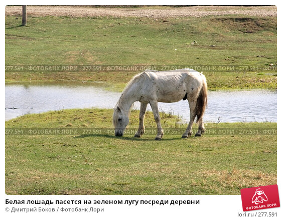 Белая лошадь пасется на зеленом лугу посреди деревни, фото № 277591, снято 20 апреля 2008 г. (c) Дмитрий Боков / Фотобанк Лори