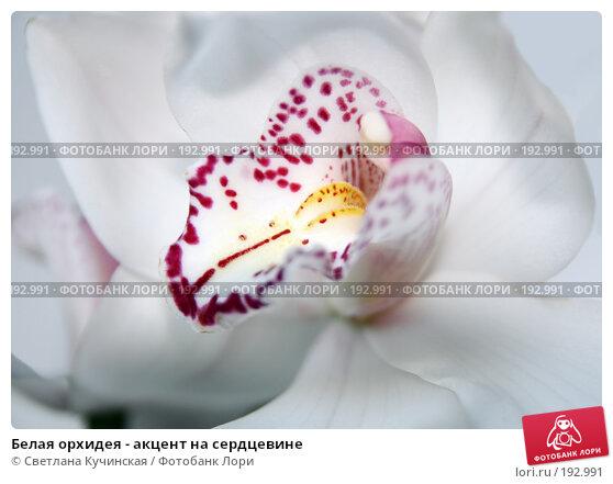Белая орхидея - акцент на сердцевине, фото № 192991, снято 21 января 2017 г. (c) Светлана Кучинская / Фотобанк Лори