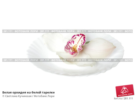 Купить «Белая орхидея на белой тарелке», фото № 281111, снято 22 апреля 2018 г. (c) Светлана Кучинская / Фотобанк Лори