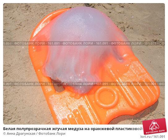 Купить «Белая полупрозрачная жгучая медуза на оранжевой пластиковой доске», фото № 161091, снято 20 июня 2006 г. (c) Анна Драгунская / Фотобанк Лори