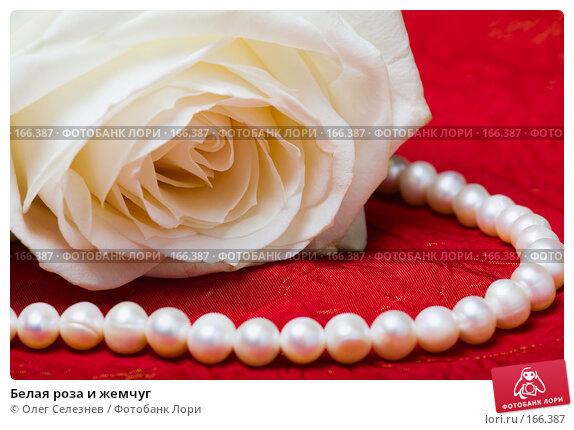 Купить «Белая роза и жемчуг», фото № 166387, снято 2 января 2008 г. (c) Олег Селезнев / Фотобанк Лори