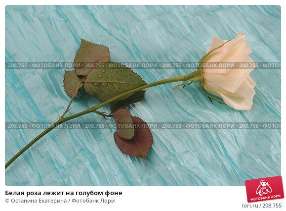 Белая роза лежит на голубом фоне, фото № 208755, снято 15 января 2008 г. (c) Останина Екатерина / Фотобанк Лори