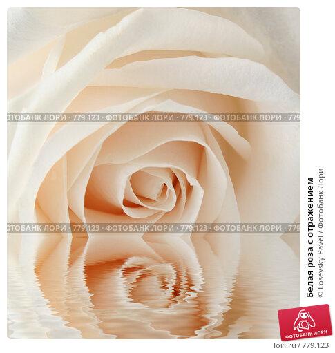 Купить «Белая роза с отражением», фото № 779123, снято 16 января 2018 г. (c) Losevsky Pavel / Фотобанк Лори