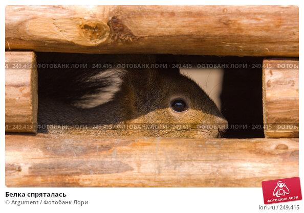 Купить «Белка спряталась», фото № 249415, снято 5 апреля 2008 г. (c) Argument / Фотобанк Лори