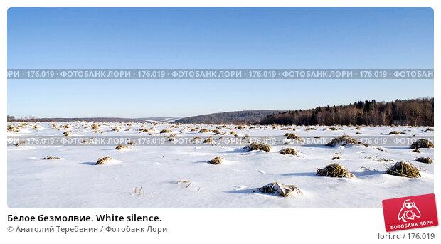 Белое безмолвие. White silence., фото № 176019, снято 5 января 2008 г. (c) Анатолий Теребенин / Фотобанк Лори