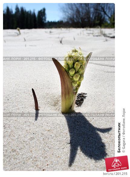 Купить «Белокопытник», фото № 201215, снято 1 мая 2006 г. (c) Gagara / Фотобанк Лори
